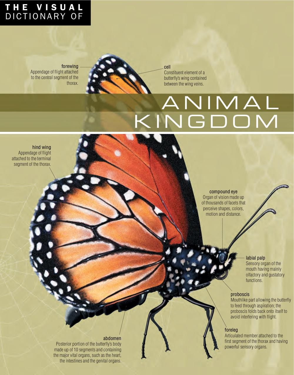 Vignette du livre The Visual Dictionary of Animal Kingdom