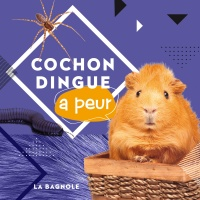 Cochon dingue a peur